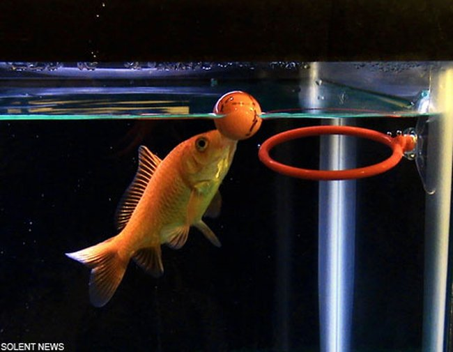 301 moved permanently for Clever fish names